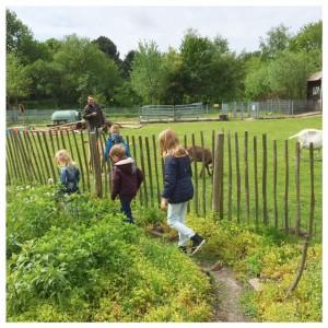 kinderboerderij pluk den haag